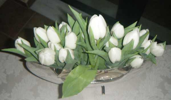White tulips silver vase