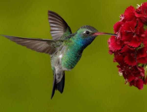 Hunningbird