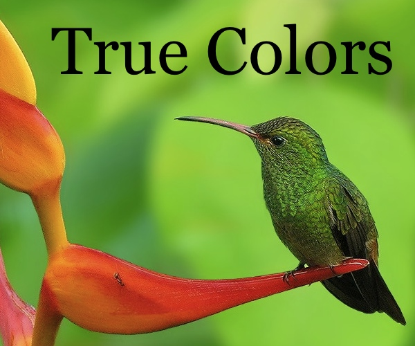 True color bird