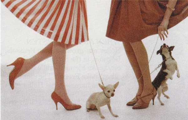 Retro skirts, shoes and dog