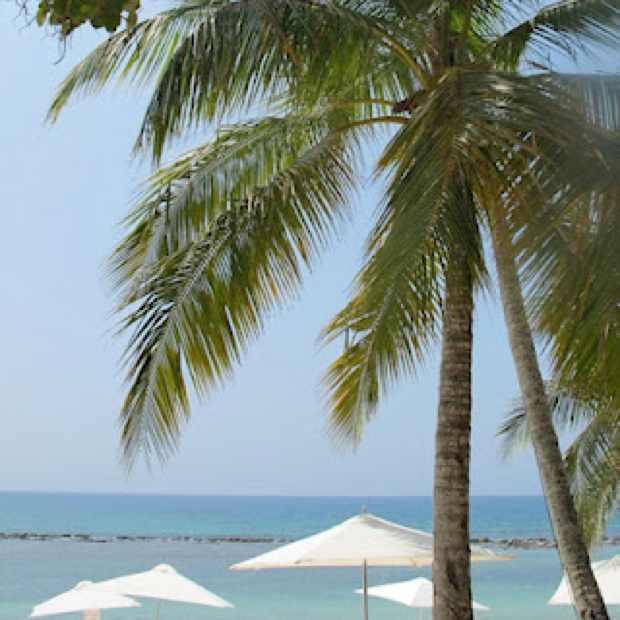 La Romana, Palm Trees, Dominican Republic