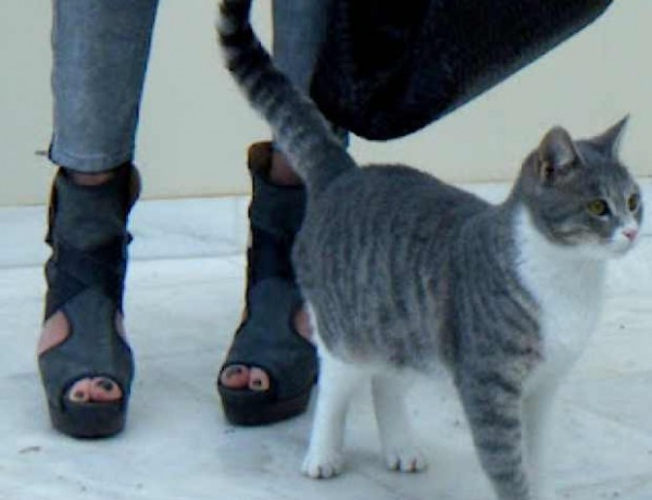 Silver Pants Chloe Boots Silver Cat