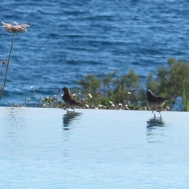 Birds Swimming Pool Paros