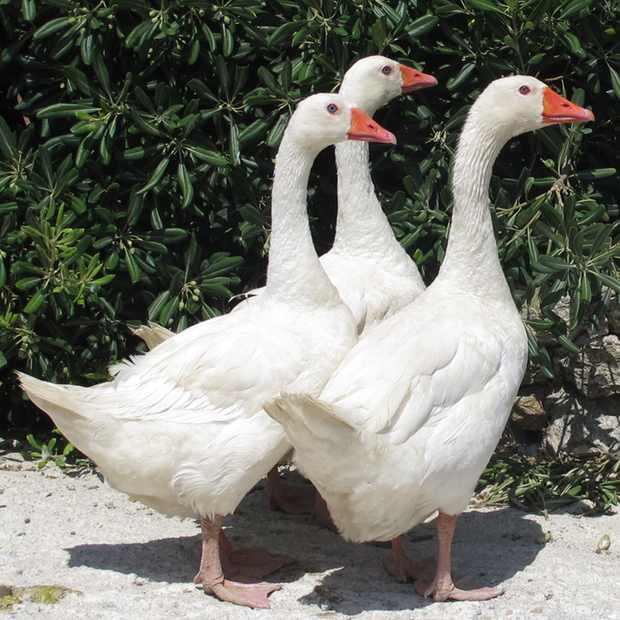 Goose 3, Retro Chic Villa, Mykonos, entrance, rent