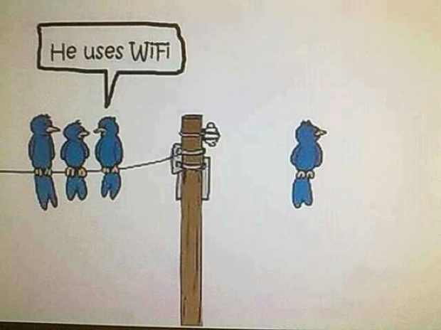 Houmor wifi birds