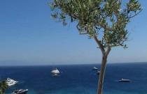 Travel Greece Mykonos Blu| A Hotel With a View