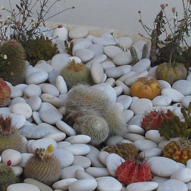 cactus and pebbles decoration