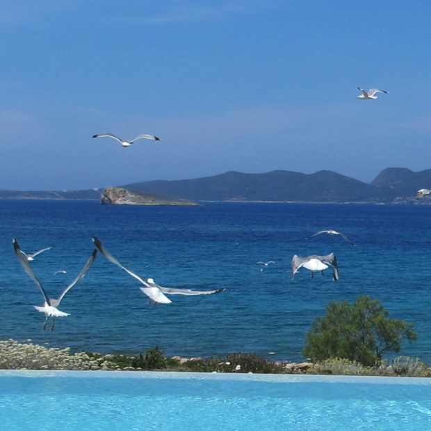 Seagulls Swimming Pool sea Paros