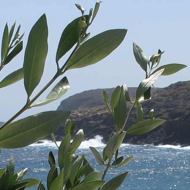 olive tree sea view,  Retro Chic Villa, Mykonos, rent