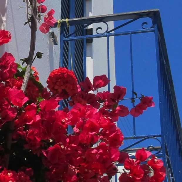 Paroikia Paros Flowers