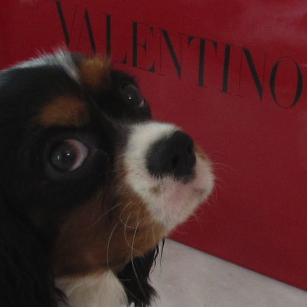 Valentino Shopping bag,  dog Oliver (King Charles)
