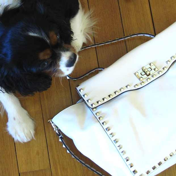 Valentino bag Oliver dog