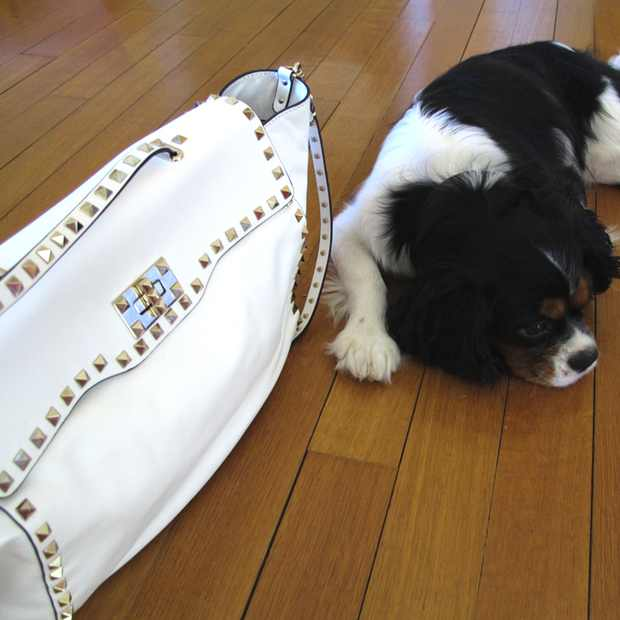 Valentino studded bag Oliver dog