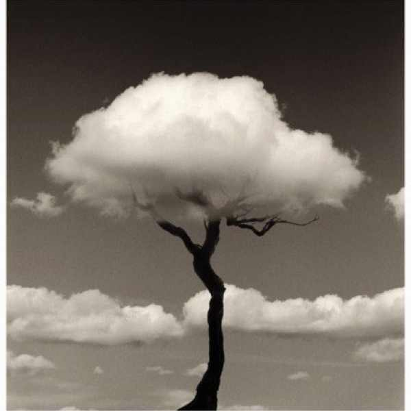 tree cloud black and white