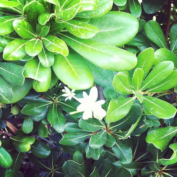 Corfu Glyfada Plants