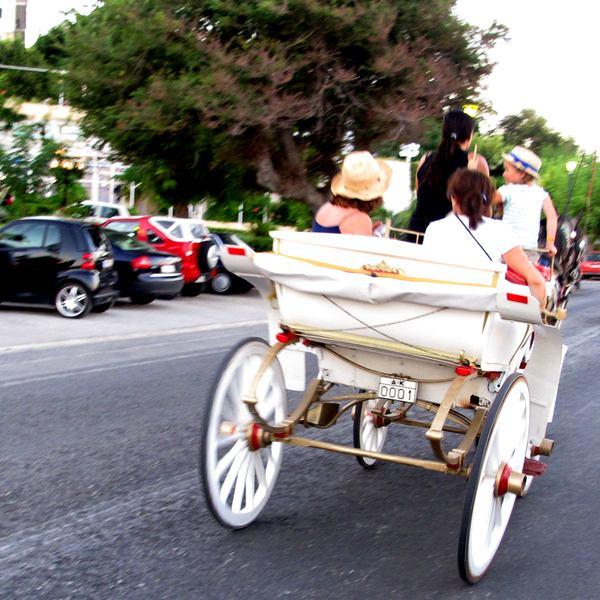 Horse Corfu