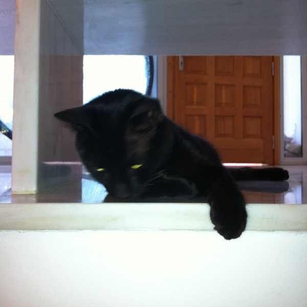Ninja our Black cat