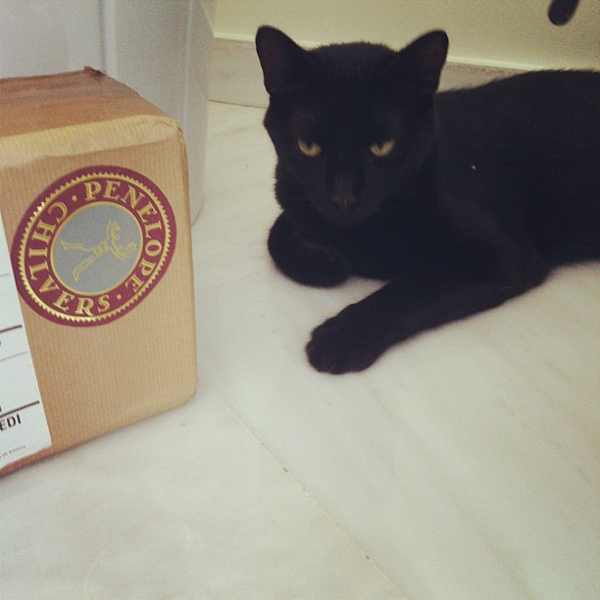 Ninja black cat Penelope Chilvers box