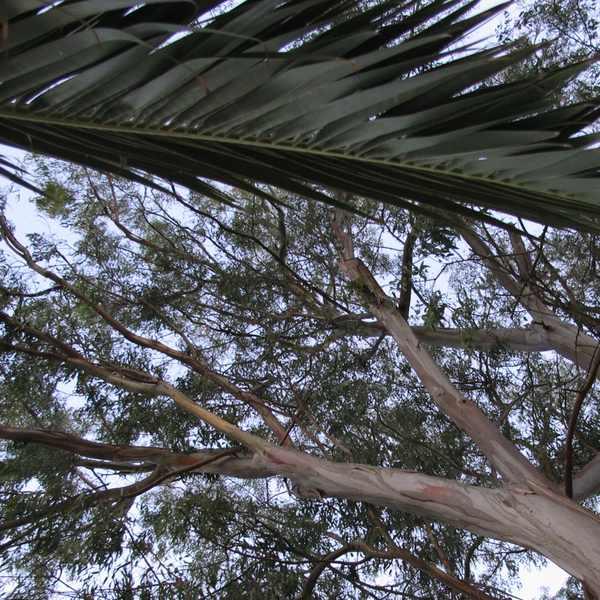 Trees Corfu