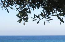 Corfu- A Memorable Escape… Beach Front Studio Villa