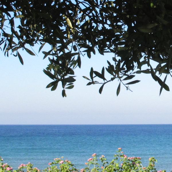 Trees Sea Corfu affordable studio villa