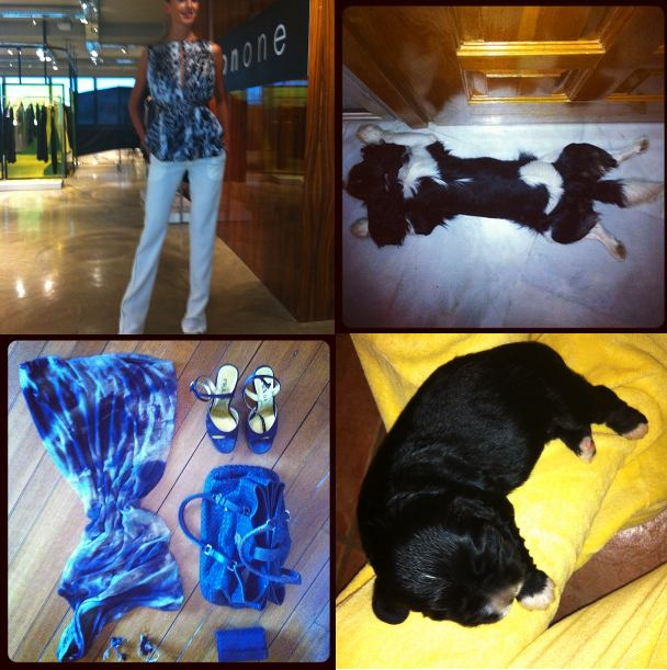 oneonone, oliver dog,olivia dog, outfit yigal azrouel