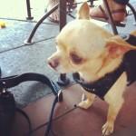 Dog Urth Caffee