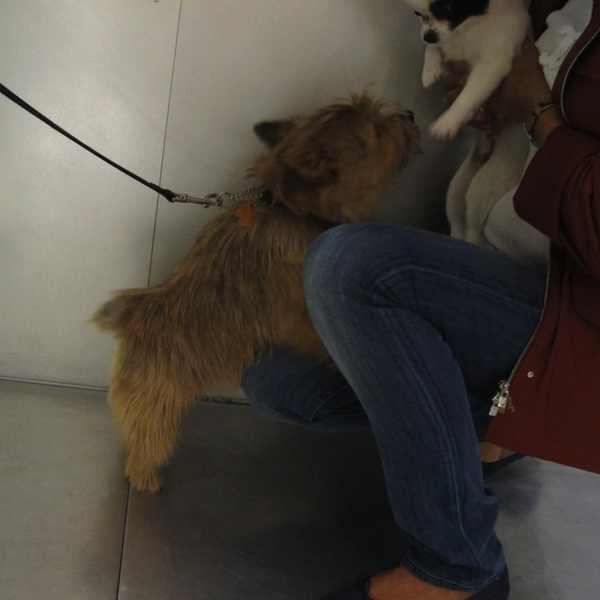 Inside Prada Soho Trendsurvivor dogs