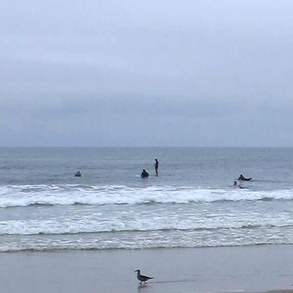 surf, bird La Jolla