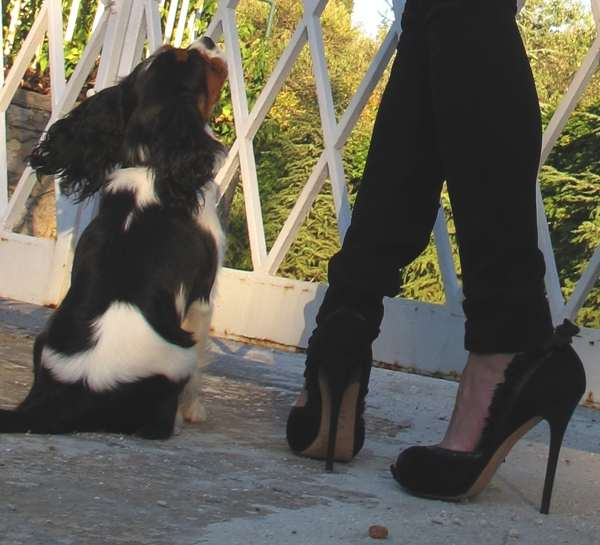 Dog Oliver, black leather Alexander McQueen shoes