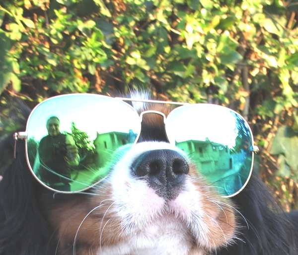 Oliver dog aviator green sunglasses