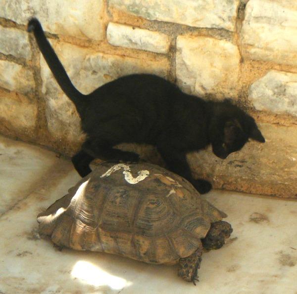 turtle baby cat ninja