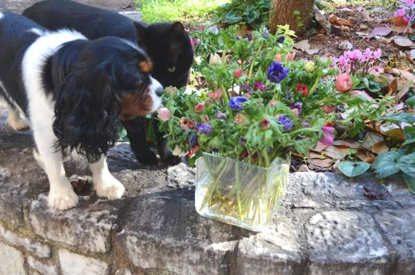 Oliver dog and Ninja cat flowers