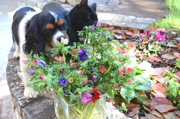 Oliver dog and Ninja cat smelling flowers