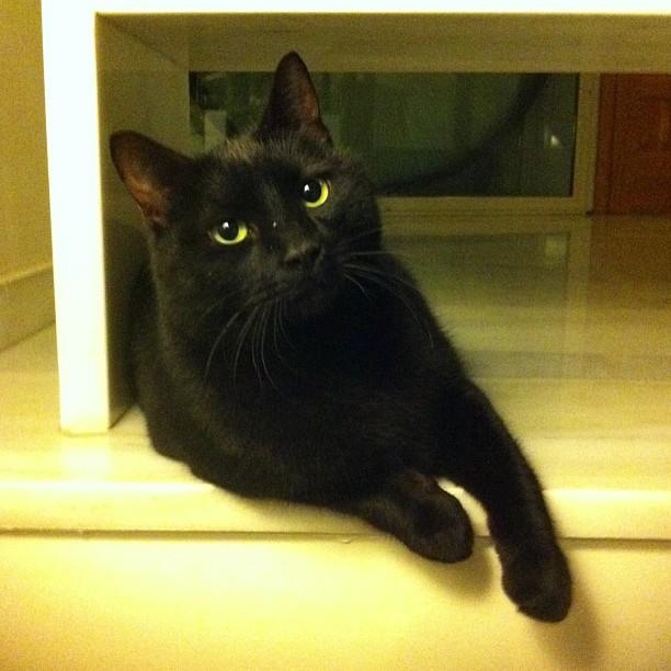 Ninja black cat 14 liked