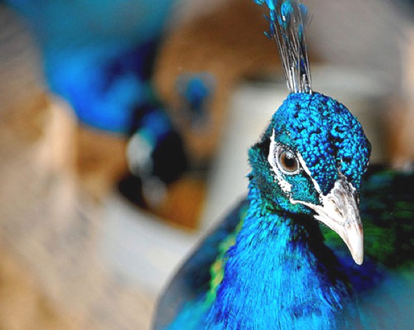 Inspiration - Fashionable Color Blue-0006