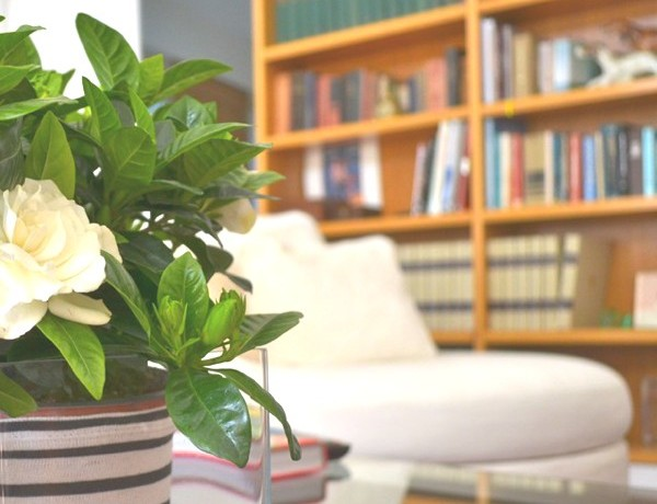 DIY- My New Gardenia Floral Centerpiece -0006