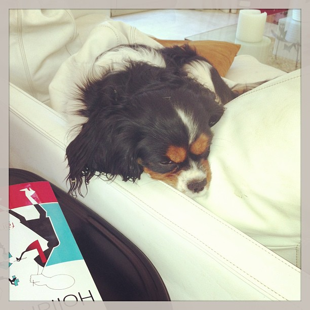 Oliver dog