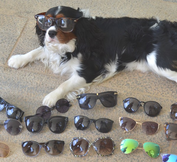 Spring Cleaning my Designer Sunglasses with Oliver-0017