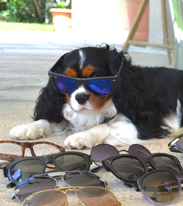Spring Cleaning my Designer Sunglasses with Oliver-0020
