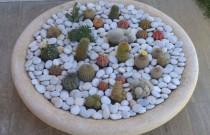 DIY- A Mini Cactus Garden