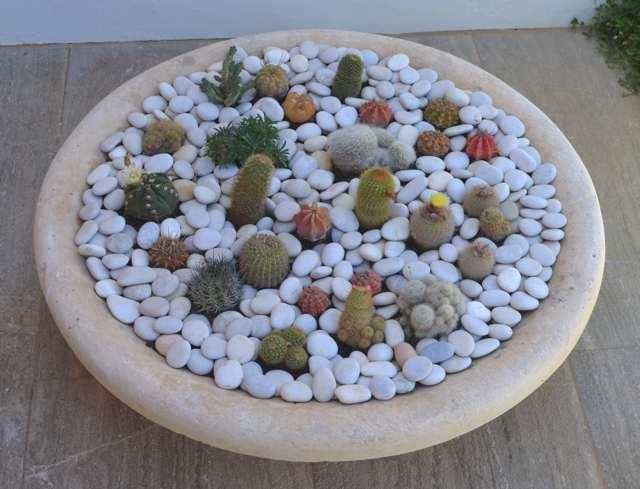 Diy A Mini Cactus Garden Trendsurvivor - small cactus garden design