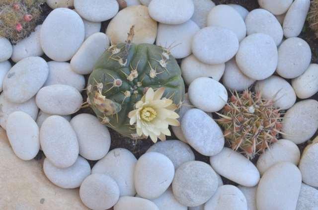 DIY- A Mini Cactus Garden-0000