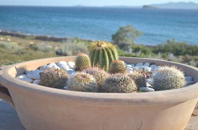DIY- A Mini Cactus Garden-0001
