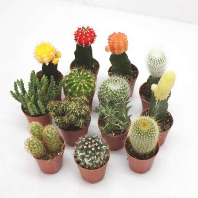 DIY- A Mini Cactus Garden-0003