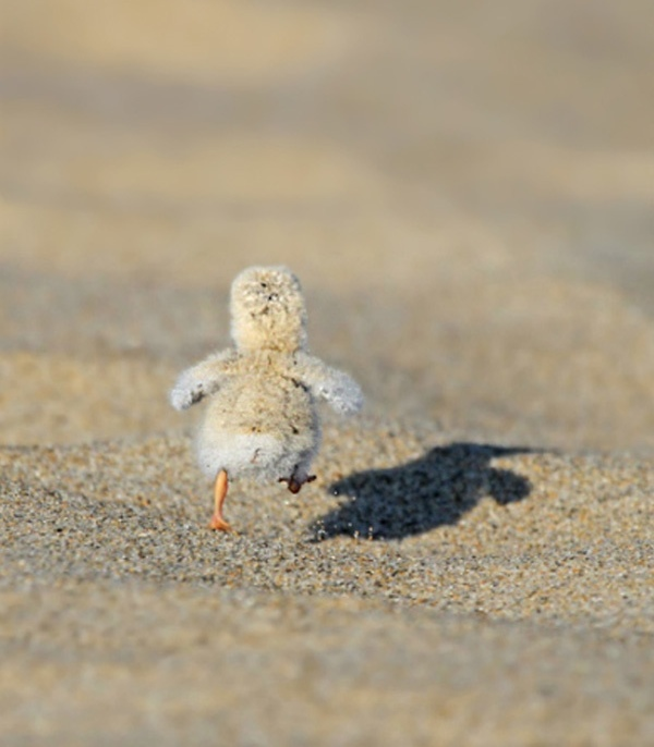 Beach cute bird