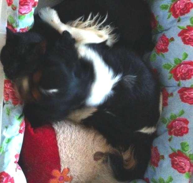 Oliver dog Ninja cat sleeping together-Cath Kidston bed