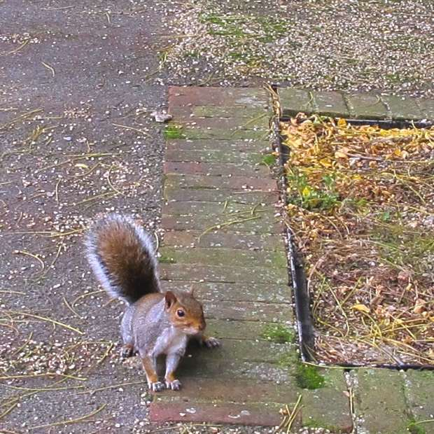 squirrel London