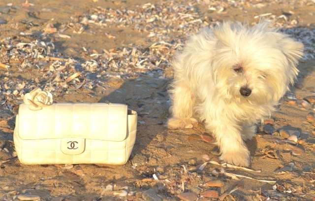 Dog and Chanel bag white