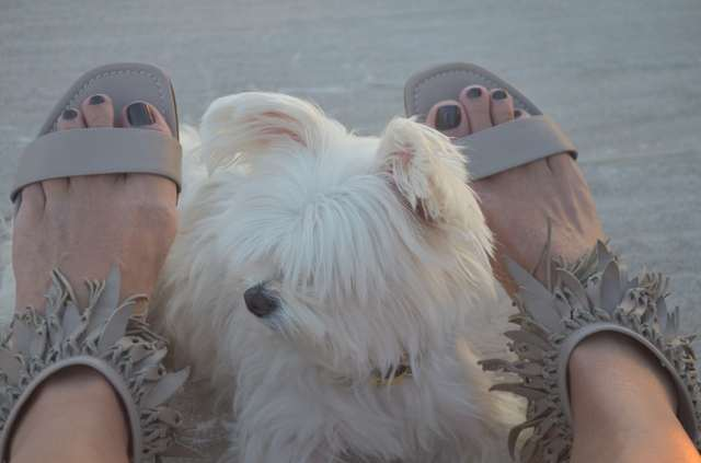 Dog and fringed sandals by Sergio Rossi